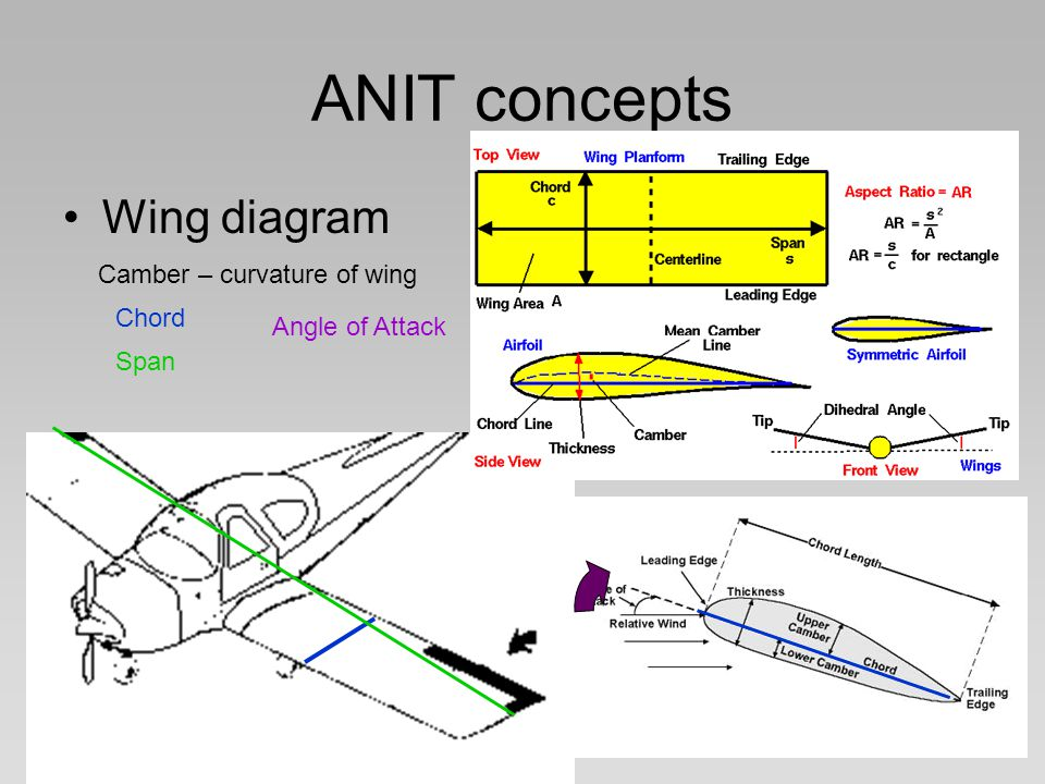 ANIT concepts Wing diagram Camber – curvature of wing Chord