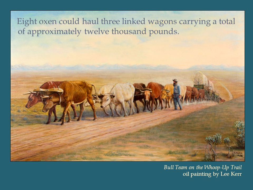 Eight oxen could haul three linked wagons carrying a total of approximately twelve thousand pounds.