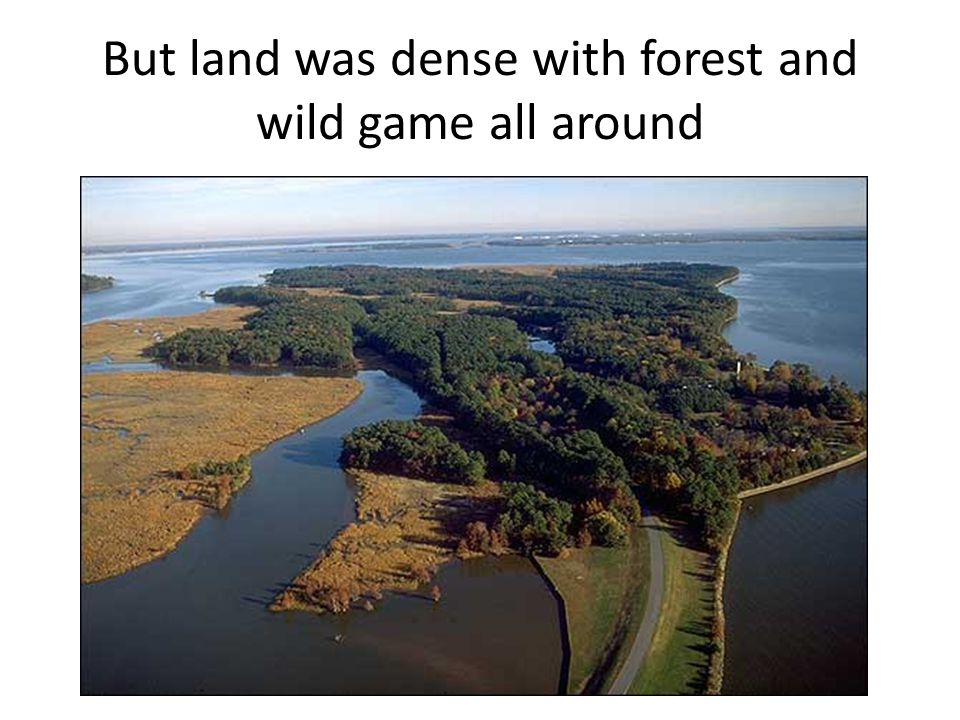 But land was dense with forest and wild game all around