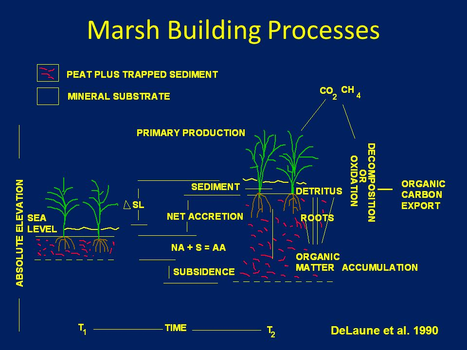 Marsh Building Processes