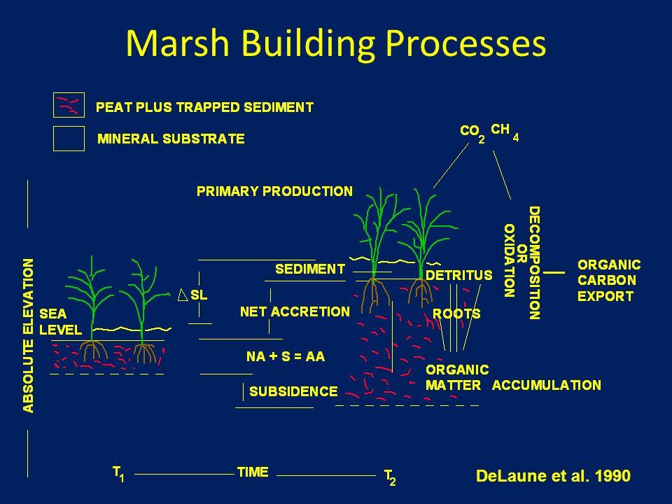 Marsh Building Processes