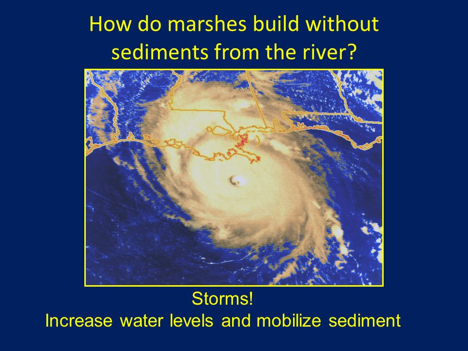 How do marshes build without sediments from the river