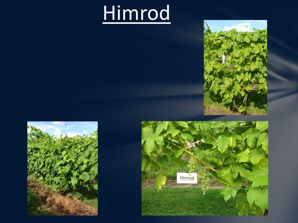 Himrod