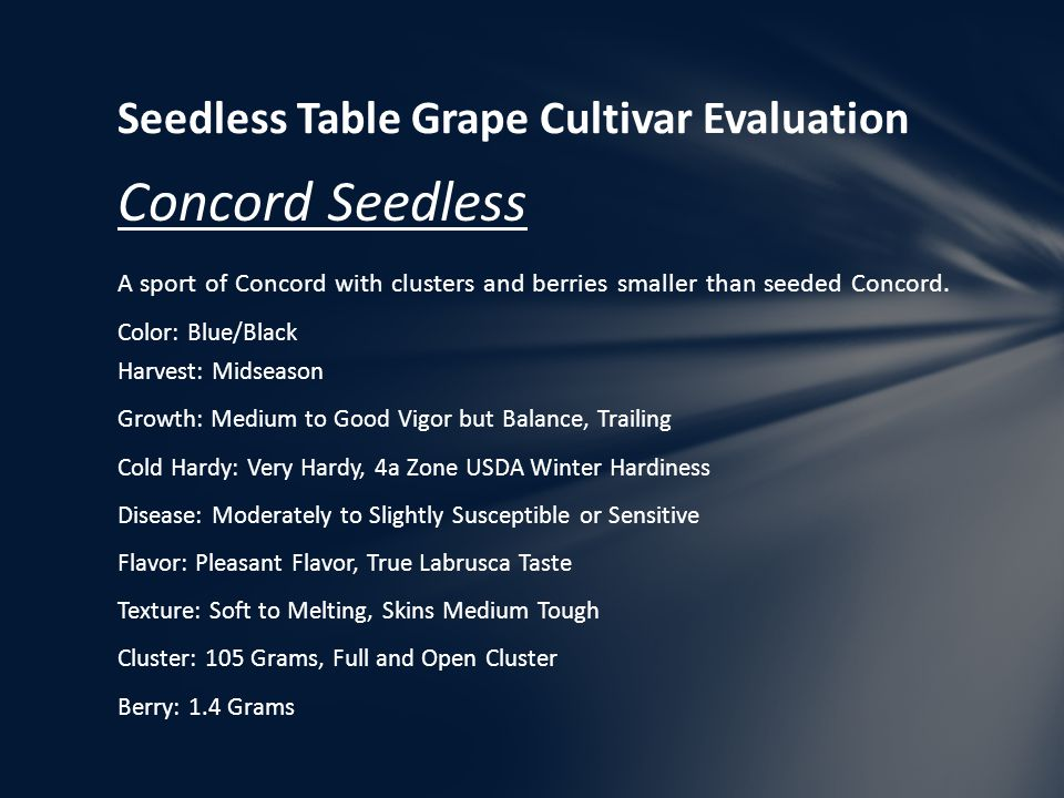Seedless Table Grape Cultivar Evaluation