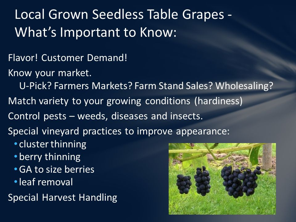 Local Grown Seedless Table Grapes - What's Important to Know: