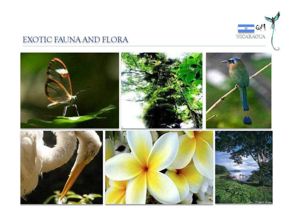 QM EXOTIC FAUNA AND FLORA NICARAGUA