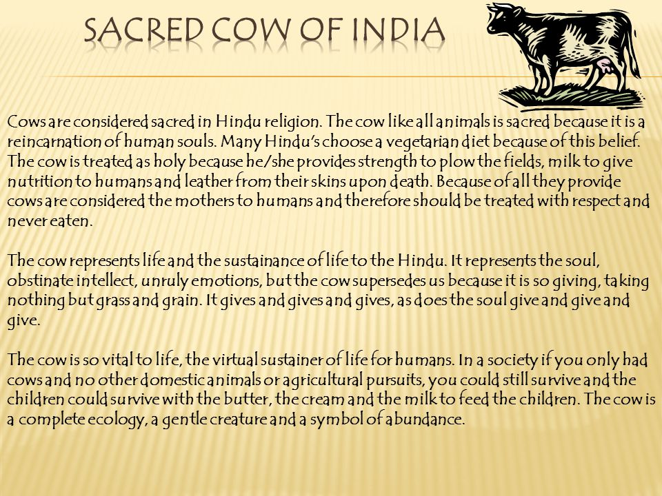 Sacred Cow of India
