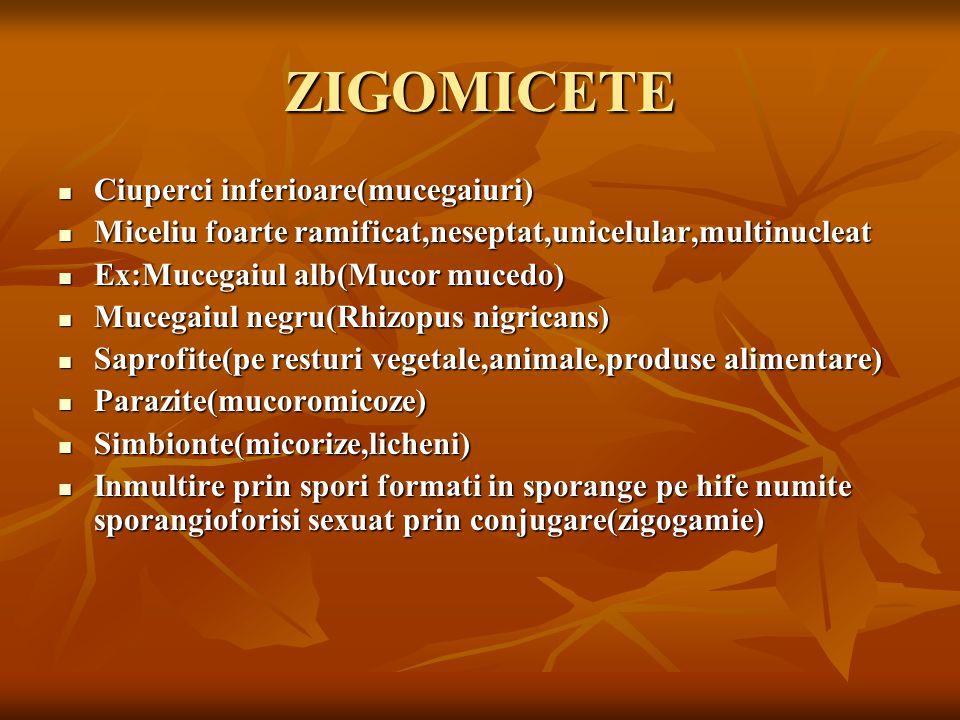 ZIGOMICETE Ciuperci inferioare(mucegaiuri)