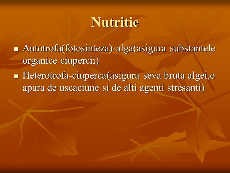 Nutritie Autotrofa(fotosinteza)-alga(asigura substantele organice ciupercii)