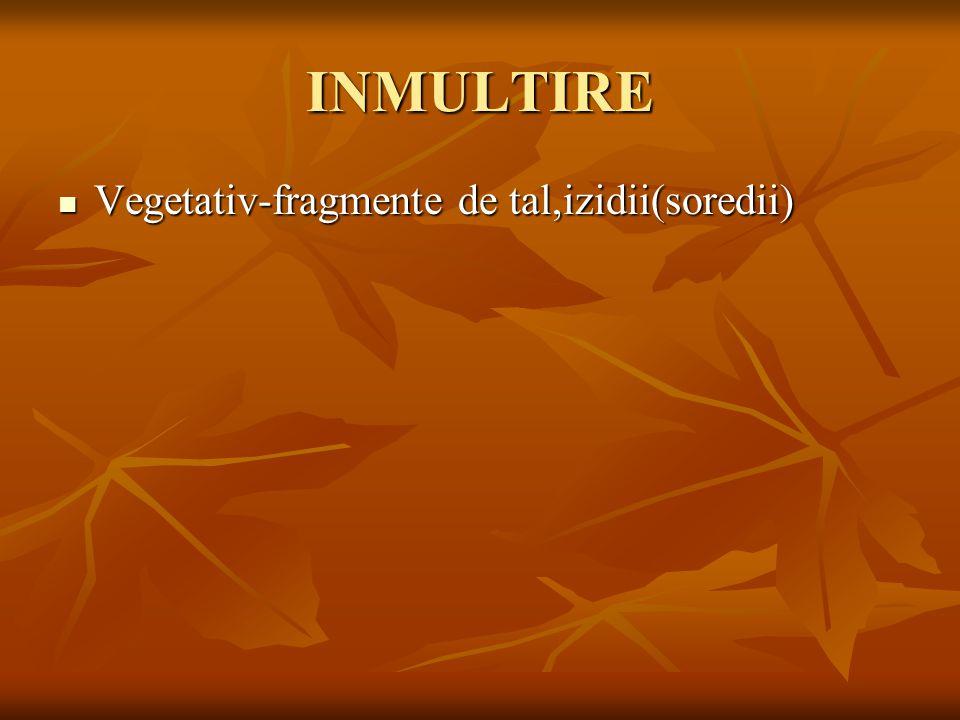 INMULTIRE Vegetativ-fragmente de tal,izidii(soredii)