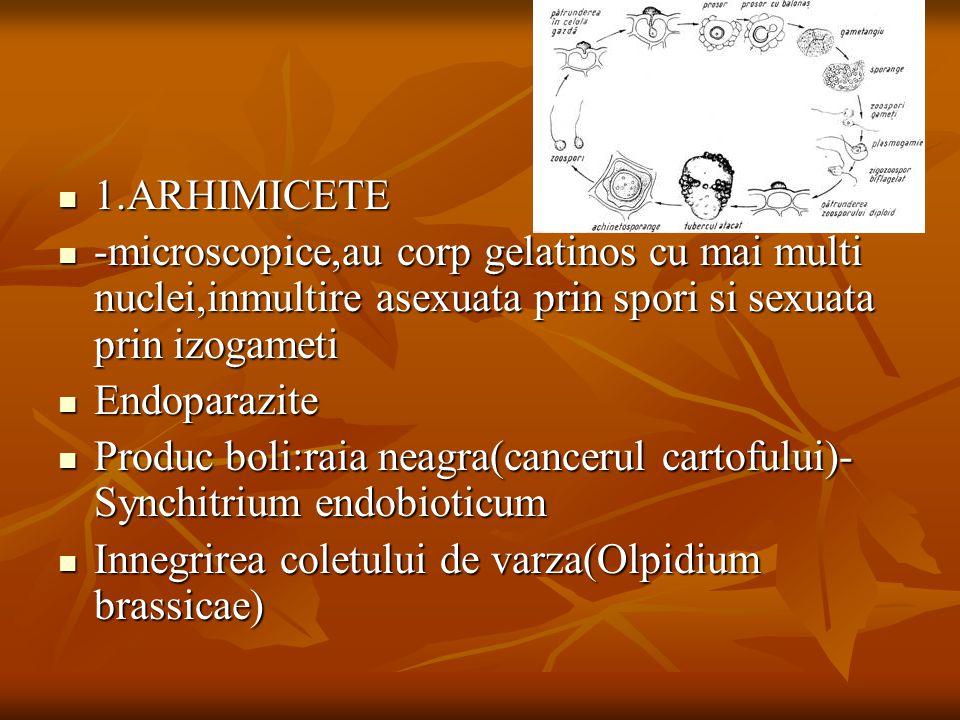 1.ARHIMICETE -microscopice,au corp gelatinos cu mai multi nuclei,inmultire asexuata prin spori si sexuata prin izogameti.