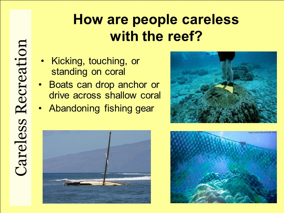 How are people careless with the reef