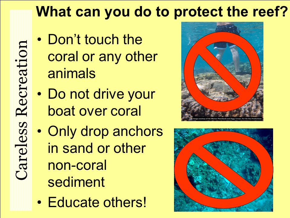 What can you do to protect the reef