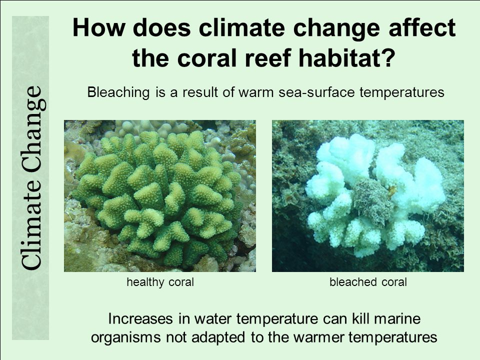 How does climate change affect the coral reef habitat