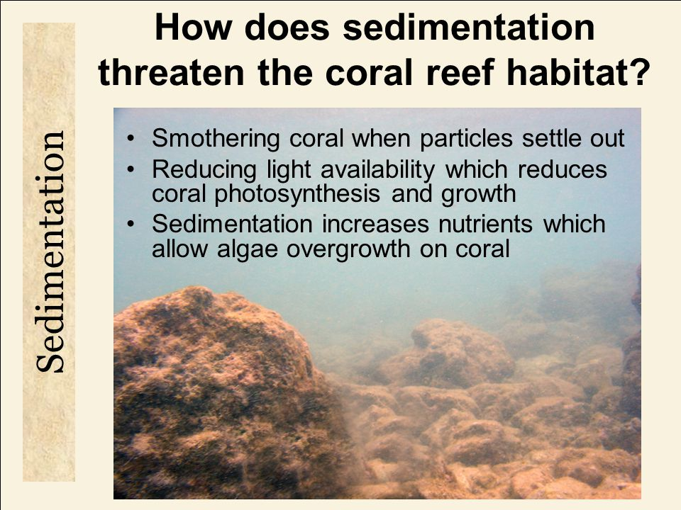 How does sedimentation threaten the coral reef habitat