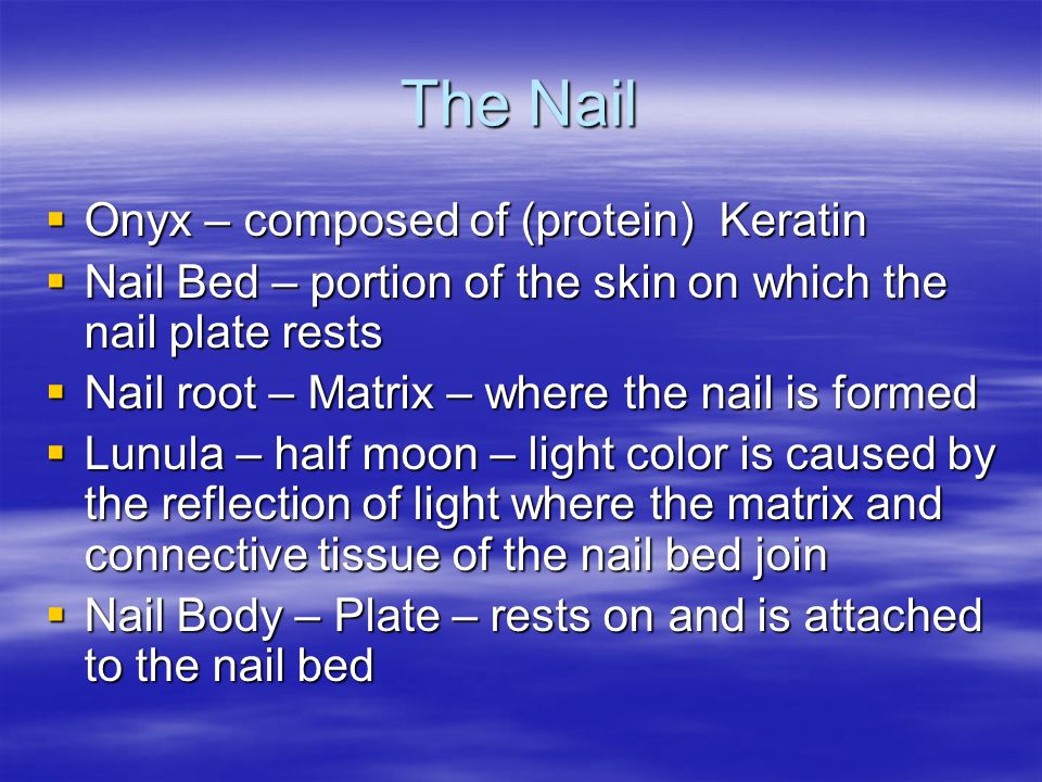 The Nail Onyx – composed of (protein) Keratin