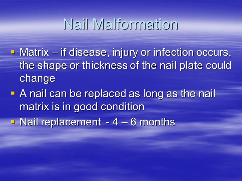 Nail Malformation Matrix – if disease, injury or infection occurs, the shape or thickness of the nail plate could change.