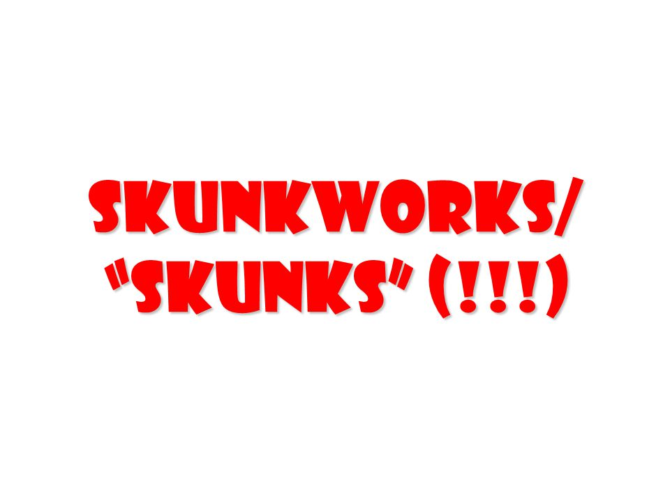 SkunkWorks/ Skunks (!!!)