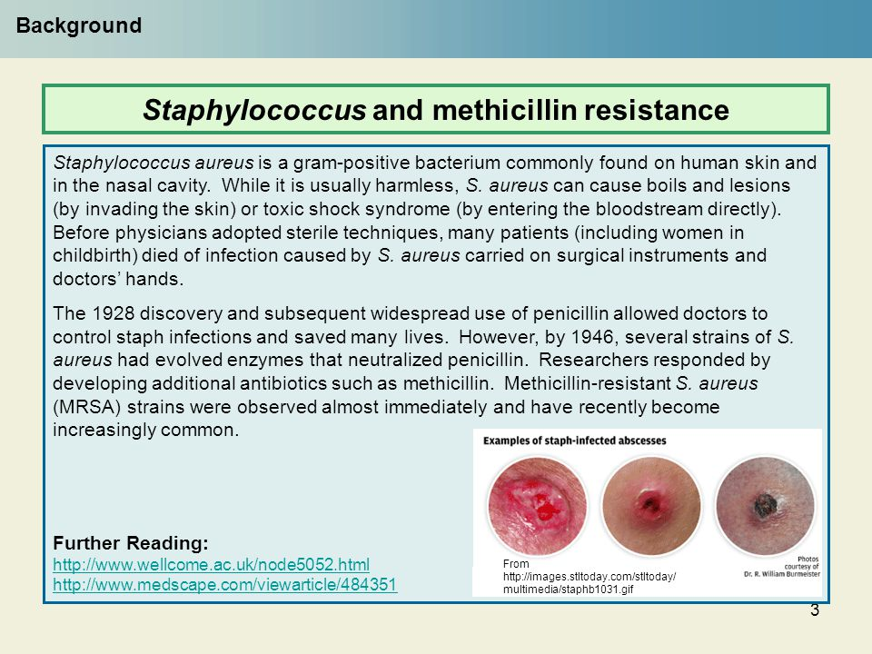 Staphylococcus and methicillin resistance