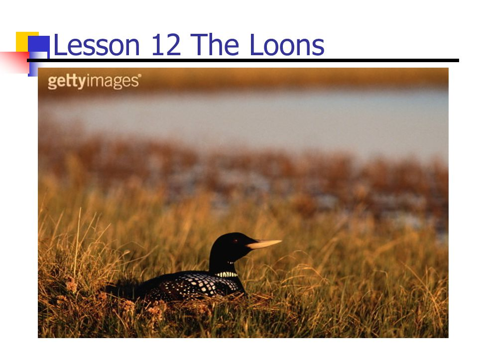 Lesson 12 The Loons