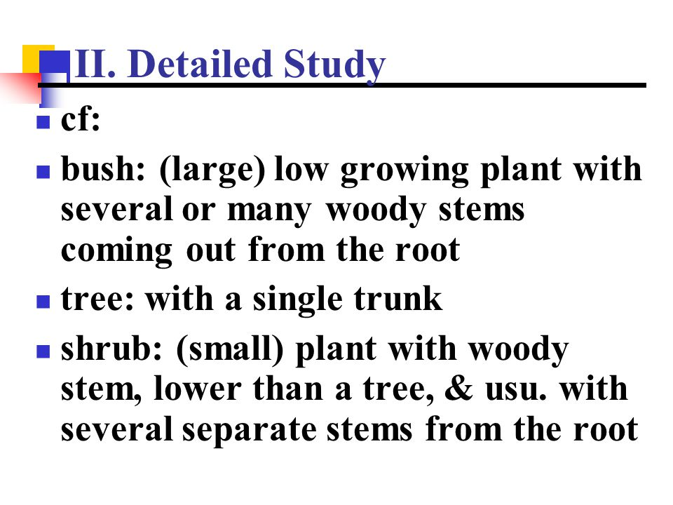 II. Detailed Study cf: bush: (large) low growing plant with several or many woody stems coming out from the root.
