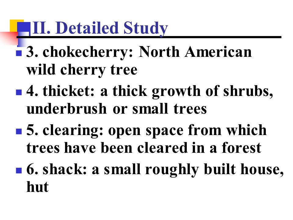 II. Detailed Study 3. chokecherry: North American wild cherry tree