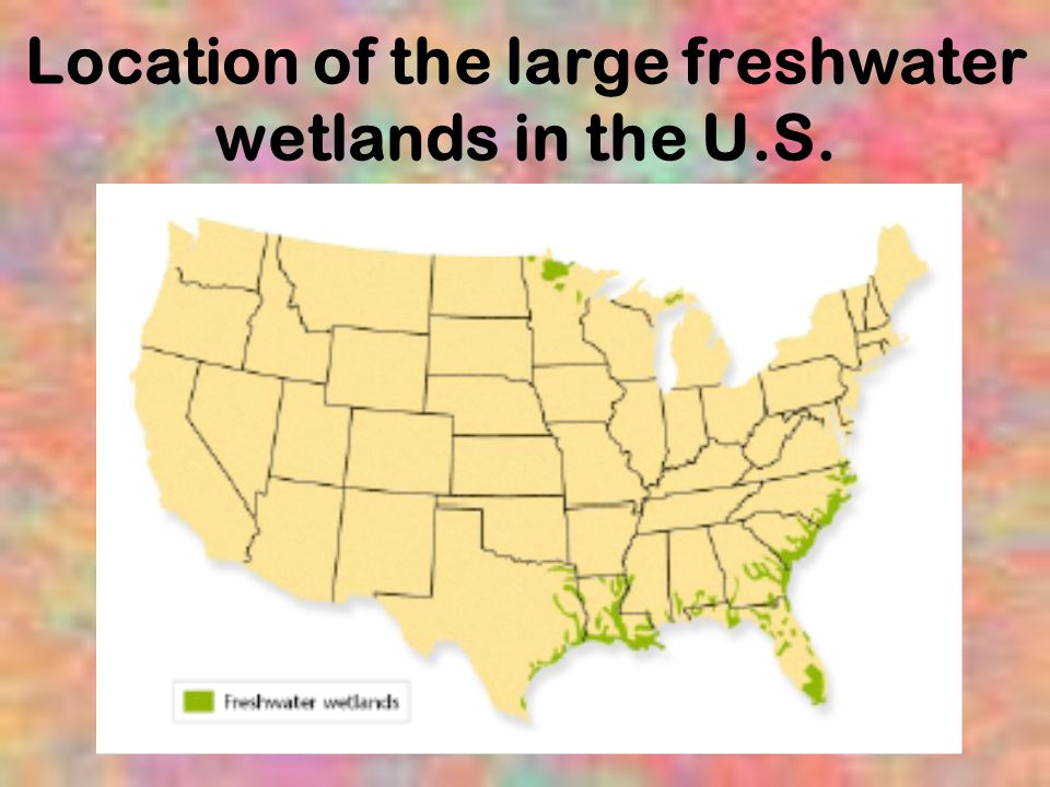 Location of the large freshwater wetlands in the U.S.