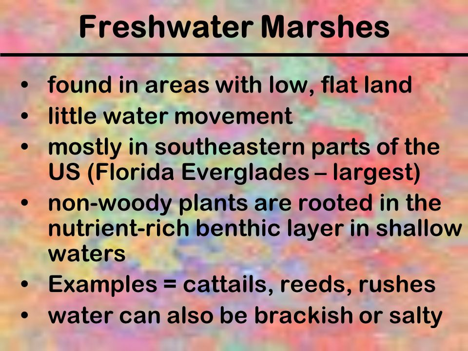 Freshwater Marshes found in areas with low, flat land