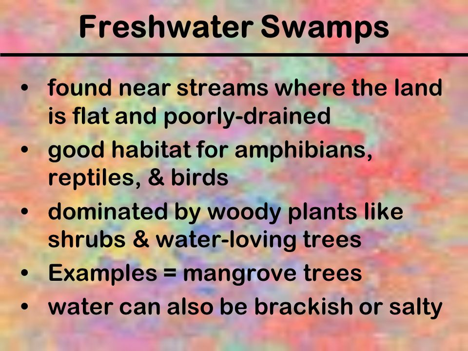 Freshwater Swamps found near streams where the land is flat and poorly-drained. good habitat for amphibians, reptiles, & birds.