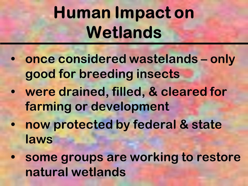 Human Impact on Wetlands