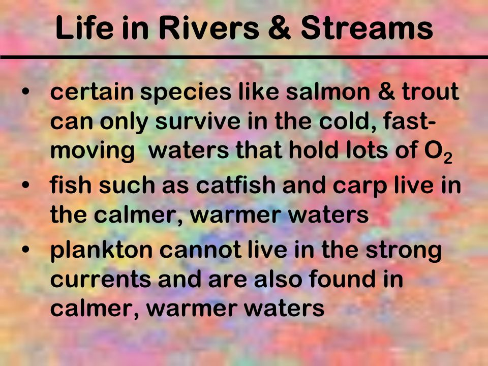 Life in Rivers & Streams