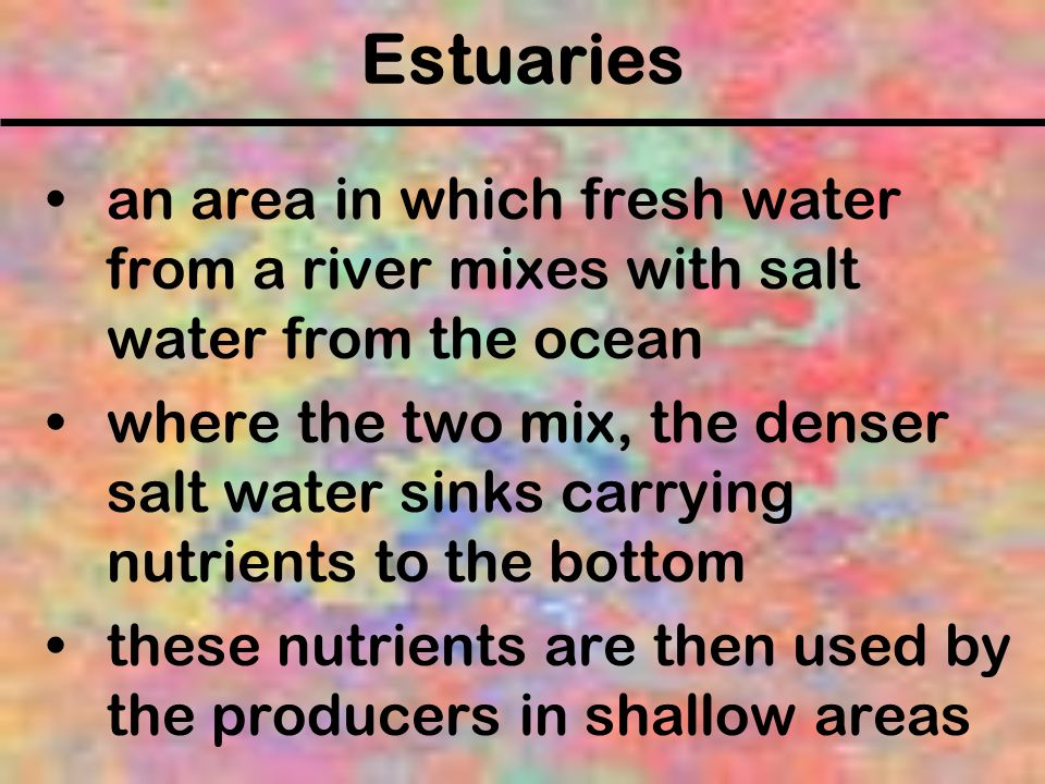 Estuaries an area in which fresh water from a river mixes with salt water from the ocean.