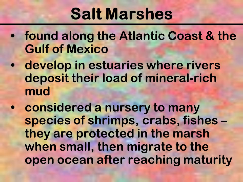 Salt Marshes found along the Atlantic Coast & the Gulf of Mexico