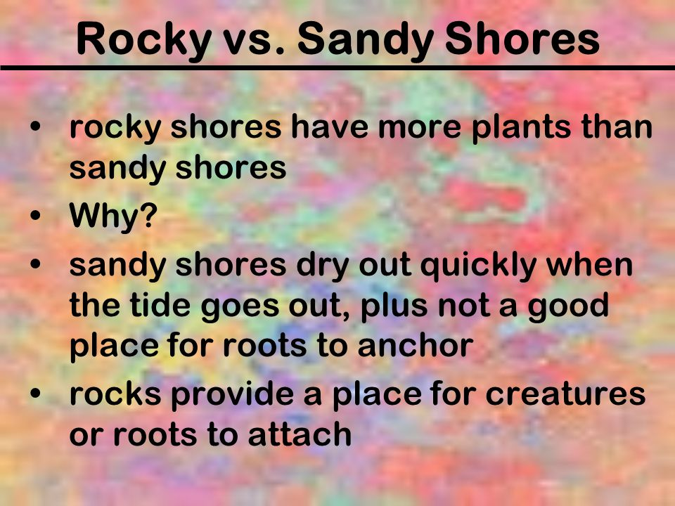 Rocky vs. Sandy Shores rocky shores have more plants than sandy shores
