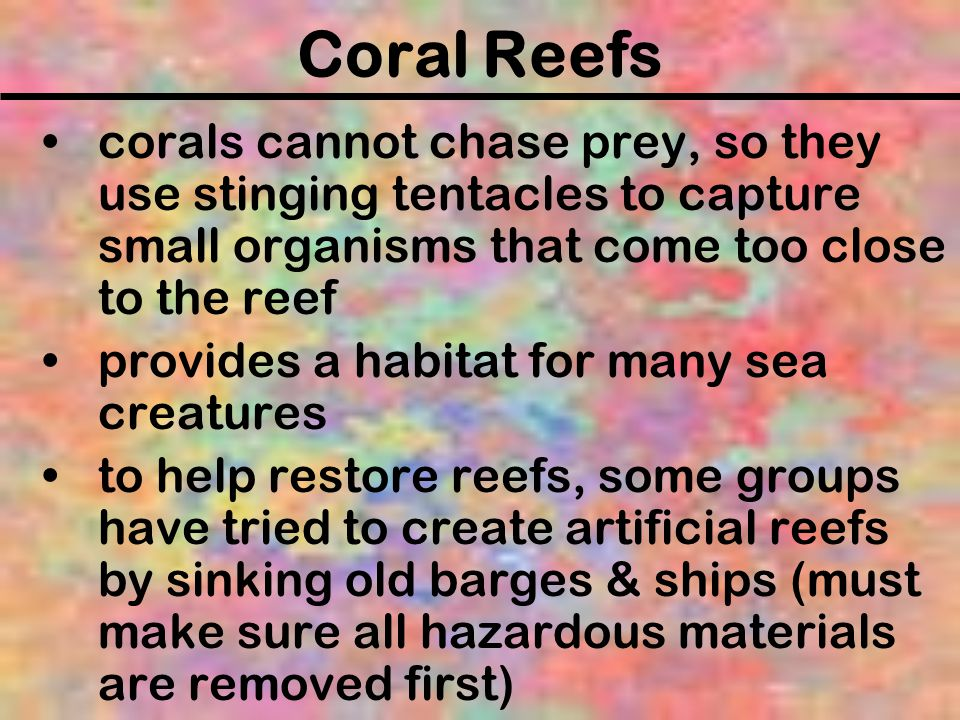 Coral Reefs corals cannot chase prey, so they use stinging tentacles to capture small organisms that come too close to the reef.