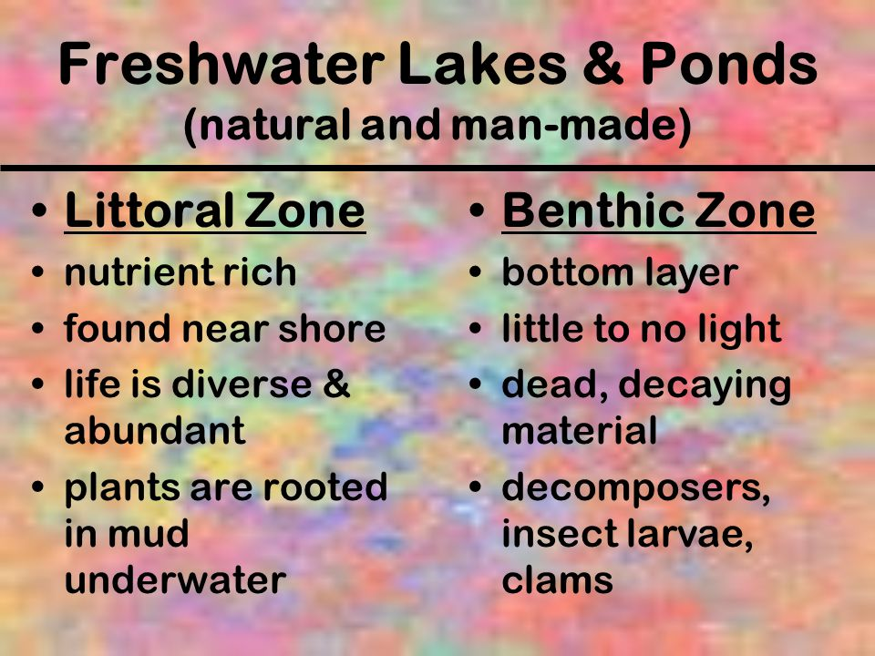Freshwater Lakes & Ponds (natural and man-made)
