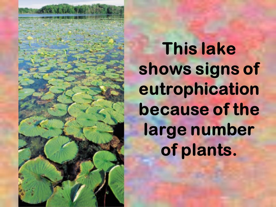 This lake shows signs of eutrophication because of the large number of plants.