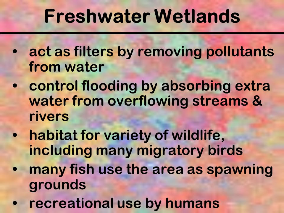 Freshwater Wetlands act as filters by removing pollutants from water