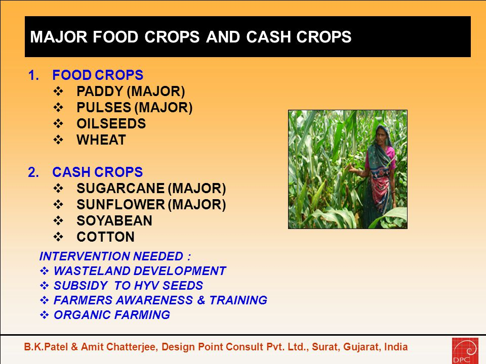 MAJOR FOOD CROPS AND CASH CROPS