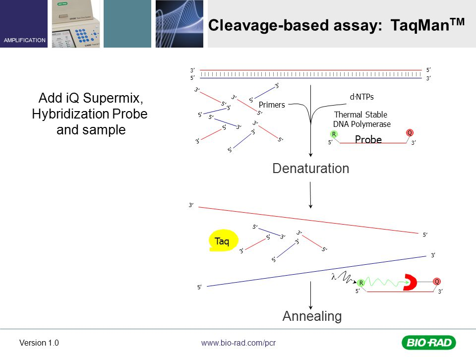 Cleavage-based assay: TaqManTM