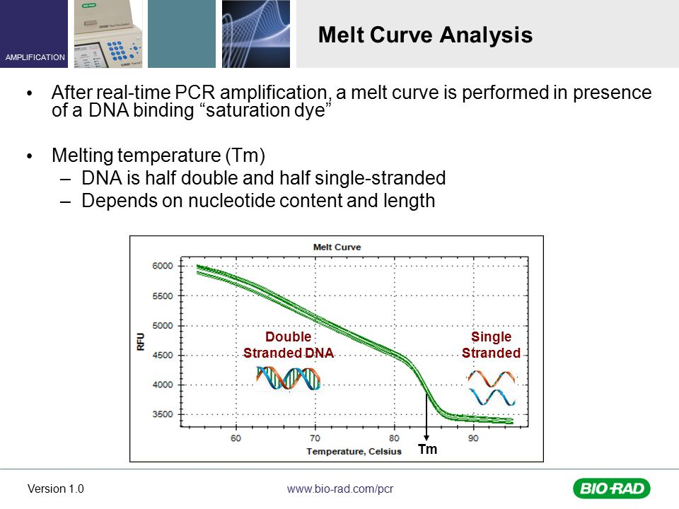 Melt Curve Analysis After real-time PCR amplification, a melt curve is performed in presence of a DNA binding saturation dye
