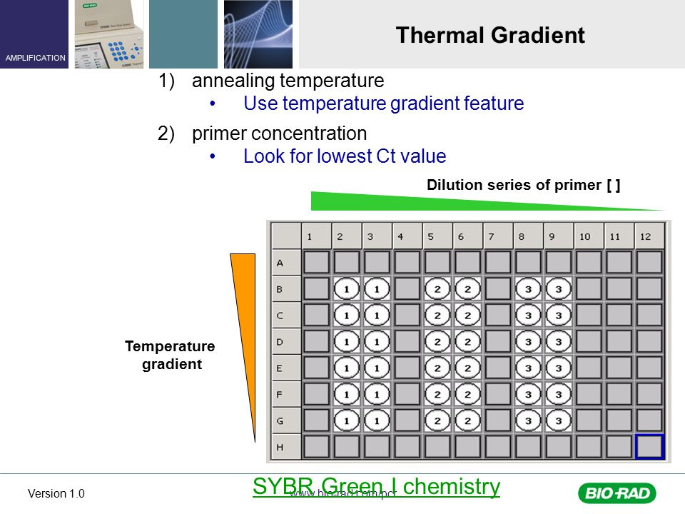 Thermal Gradient SYBR Green I chemistry annealing temperature
