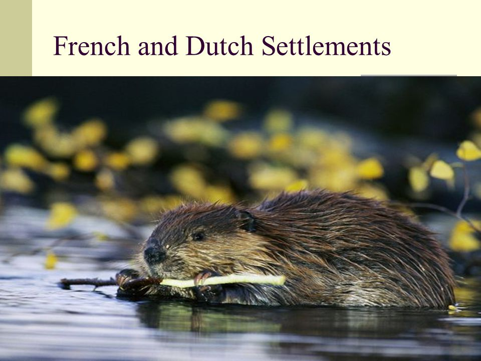French and Dutch Settlements