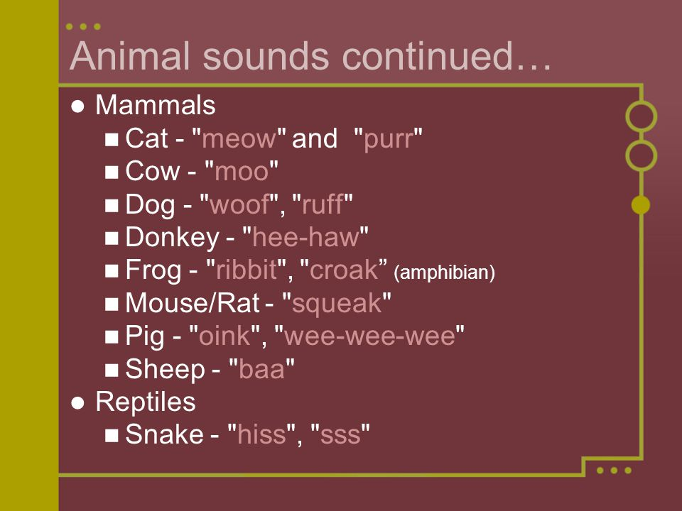 Animal sounds continued…
