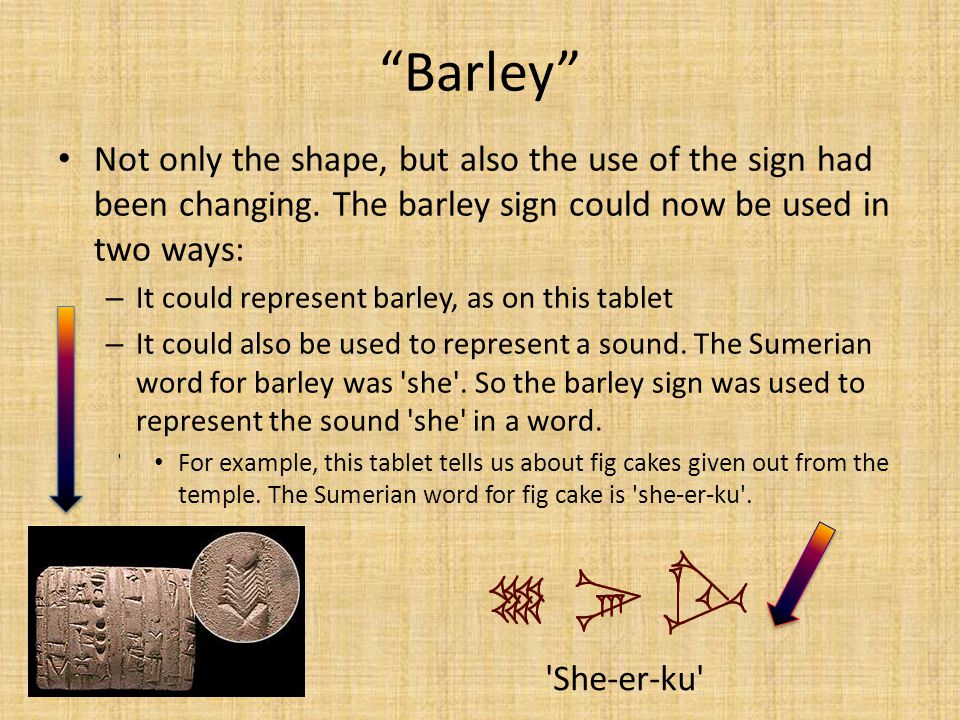 Barley Not only the shape, but also the use of the sign had been changing. The barley sign could now be used in two ways: