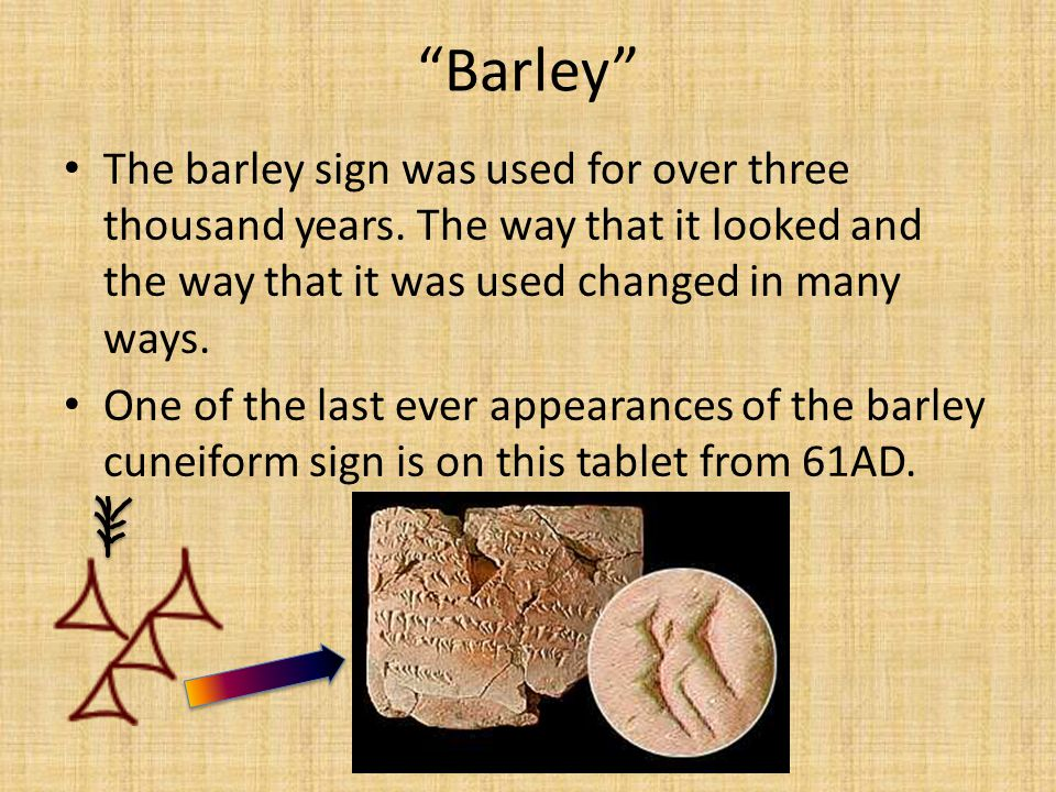 Barley The barley sign was used for over three thousand years. The way that it looked and the way that it was used changed in many ways.