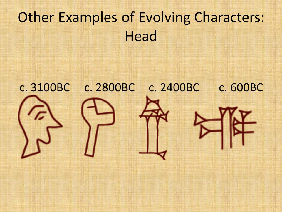 Other Examples of Evolving Characters: Head