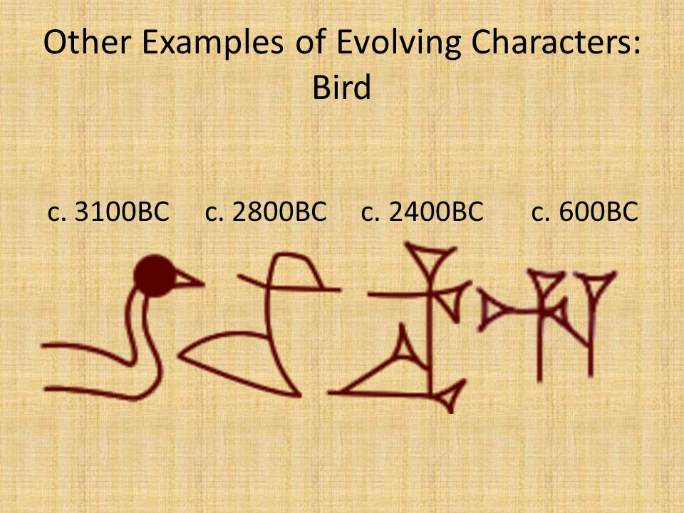Other Examples of Evolving Characters: Bird