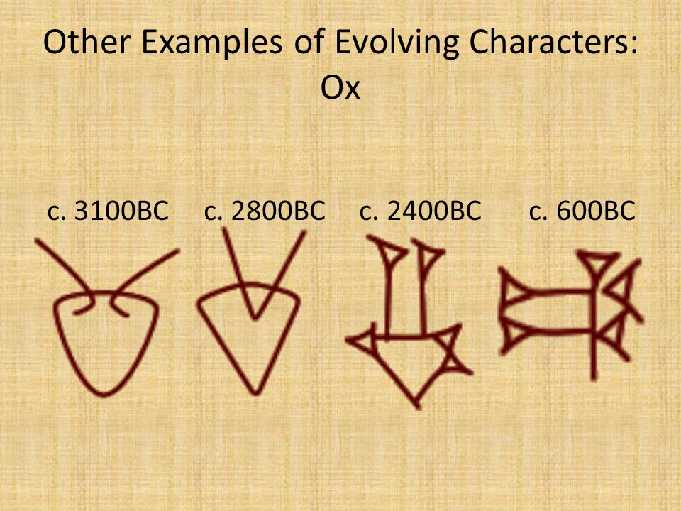 Other Examples of Evolving Characters: Ox