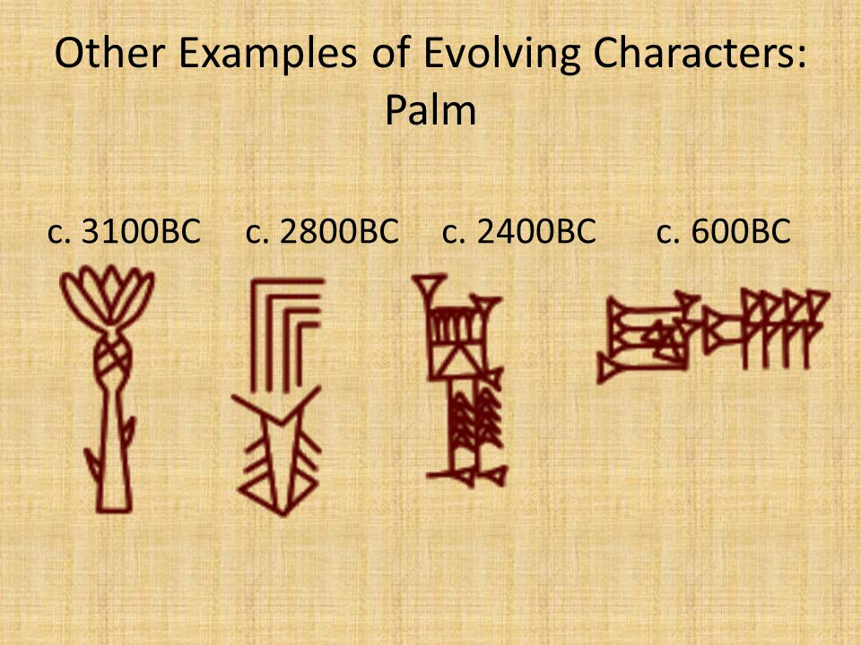 Other Examples of Evolving Characters: Palm